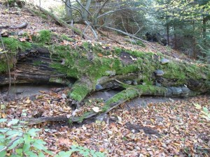 Totholz ist eine Bereicherung für das Ökosystem Wald und erhöht die Biodiversität Foto: Staatsbetrieb Sachsenforst